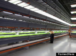 Inside FarmedHere's new Bedford Park, Ill. facility, the largest indoor vertical farm of its kind in the nation.