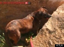 Hero dog Mole re-enacts how he found the hiker.