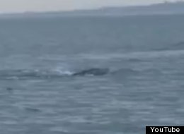 Ireland's Lough Foyle may have its own 'monster,' like Loch Ness.