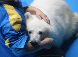Keeper Sun Qinbao cuddles polar bear cub Pezoo at a local aquarium in Yantai, east China's Shandong Province, Sept. 6, 2013. (Canadian Press photo)