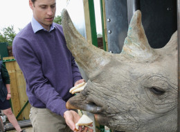 Prince William, Duke of Cambridge feeds a 5 year old black rhino called Zawadi as he visits Port Lympne Wild Animal Park on June 6, 2012 in Port Lympne, England. (Photo by Chris Jackson/Getty Images)