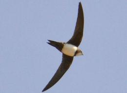 Wikimedia Commons: Birdwatching Barcelona