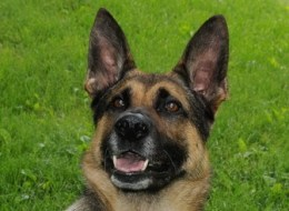 Astro, a RCMP dog, found a five-year-old boy sleeping in a dresser after his mother couldn't find him.