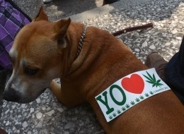 A sticker is seen on a dog's back during a demo in support of the legalization of marijuana, in Mexico City, on May 5, 2012, as part of the 2012 Global Marijuana March.