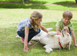 A Nova Scotia dog park bans children under the age of 12, citing safety concerns.