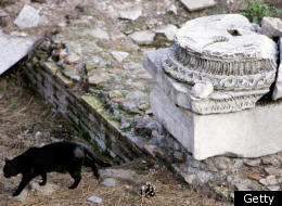A cat walks past ancient Roman ruins in central Rome. (PAOLO COCCO/AFP/Getty Images)