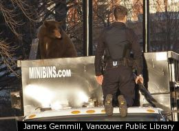 A bear stands on a garbage truck in downtown Vancouver Monday.