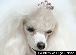 Pure-bred toy poodle Princess lived less than a year, but according to its owner, Olga Horvat, was possessed by a demon.