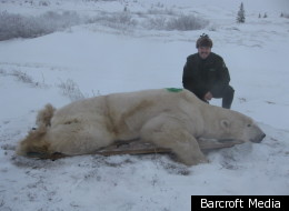 polar bear prison: bears are trapped then taken to the 'prison'