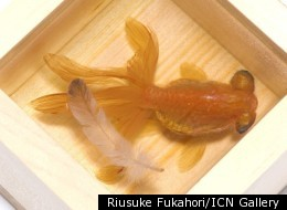 Riusuke Fukahori/ICN Gallery