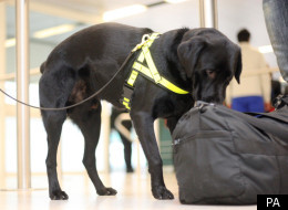 Sniffer dogs fail to detect the fertiliser bomb