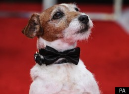 Uggie the dog from The Artist is nominated for two awards