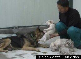 China Central Television