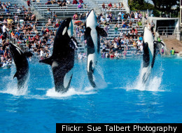 The Killer Whales may 'sue' SeaWorld