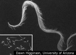 Dawn Higginson, University of Arizona