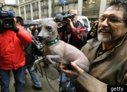 Jose Barrera holds up Alma Dulce, a 2 year old female hairless Xoloitzcuintli, one of the six new breeds as they arrive in New York January 26, 2012 for a press conference about the upcoming 136th annual Westminster Kennel Club Dog Show to take place...