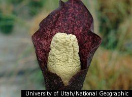 University of Utah/National Geographic