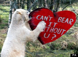 Walker the Polar Bear was given the Valentine's gift despite being the only one of his species in the UK