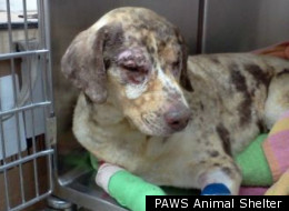 PAWS Animal Shelter