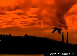 Flickr: *~Dawn~*