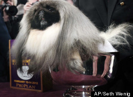 Best in show: Malachy the four-year-old Pekingese