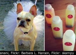 Twitter: @harpoonani, Flickr: Barbara L. Hanson, Flickr: skampy