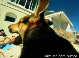 Dave Meinert decided to have a dog named Lemon shoot his own music video. Whether he can edit it is a different story.