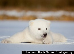 Hilmer and Koch Nature Photography