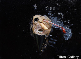 Tilton Gallery