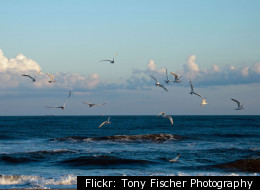 Flickr: Tony Fischer Photography
