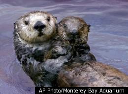 AP Photo/Monterey Bay Aquarium