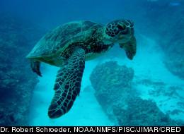 Dr. Robert Schroeder, NOAA/NMFS/PISC/JIMAR/CRED