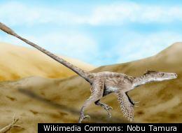 Wikimedia Commons: Nobu Tamura
