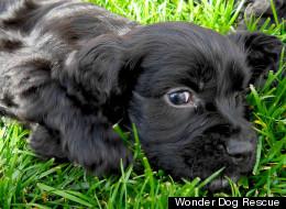 OMFG! Puppies!