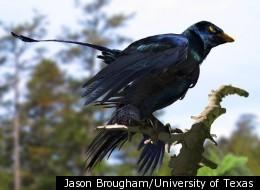 Jason Brougham/University of Texas