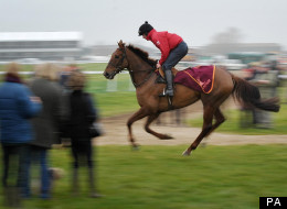 A rider on the gallops before day one of the 2012 Cheltenham Fesitval