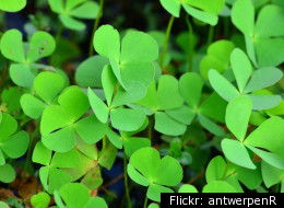If your friend claims to be Irish on St. Patrick's Day, insist that he find you a four-leaf clover.