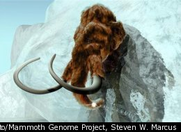 In this computer-generated handout by ExhibitEase LLC, a woolly mammoth makes its way out of a large block of ice.