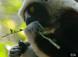 'Madagascar, Lemurs and Spies' is on BBC2 on Thursday 15 March, and available on iPlayer