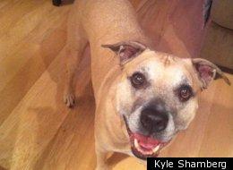 Kyle Shamberg