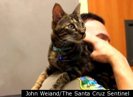 This stowaway kitten traveled 85 miles hidden in the engine of a van and, luckily, she's in safe hands now.