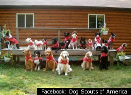 The Dog Scouts of America now have 38 troops spread out among 22 states.