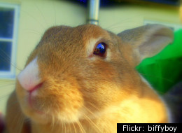 Easter jokes (file picture of a rabbit)