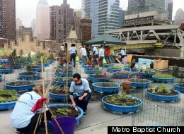 The Hell's Kitchen Farm Project, a collaborative effort of Metro Baptist Church, Rauschenbusch Metro Ministries, Metropolitan Community Church of New York and Clinton Housing Development Company, recently kicked off its second growing season on the roof of Metro Baptist Church.