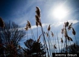Jeremy Braun
