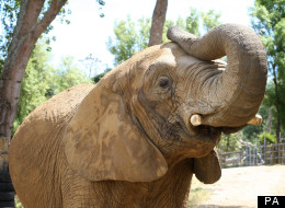 The elephant, known as Jumbo, killed the zookeeper on Wednesday