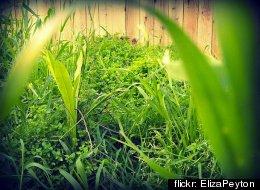 flickr: ElizaPeyton