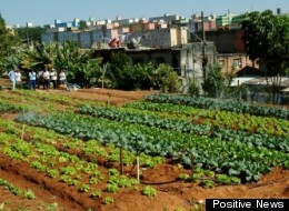A community urban garden project in Zona Leste.