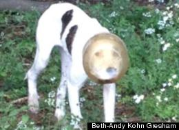 Beth-Andy Kohn Gresham's Facebook post saved a stray dog with a plastic container stuck on its head.