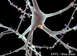 EPFL / Blue Brain